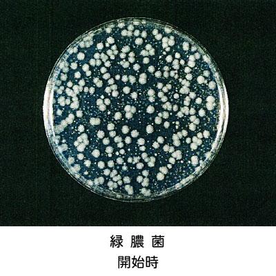 緑膿菌開始時