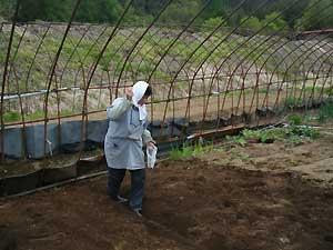 えごまの種蒔き