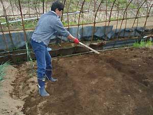えごまの種に土をかける
