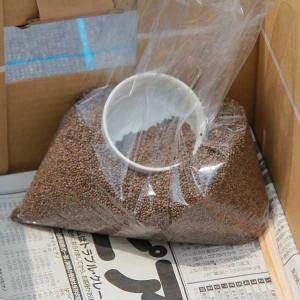 えごま種子:黒種