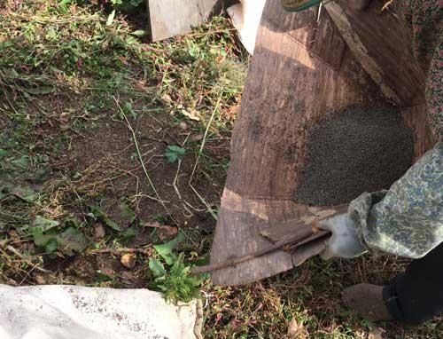 えごま栽培、唐箕でゴミを飛ばす