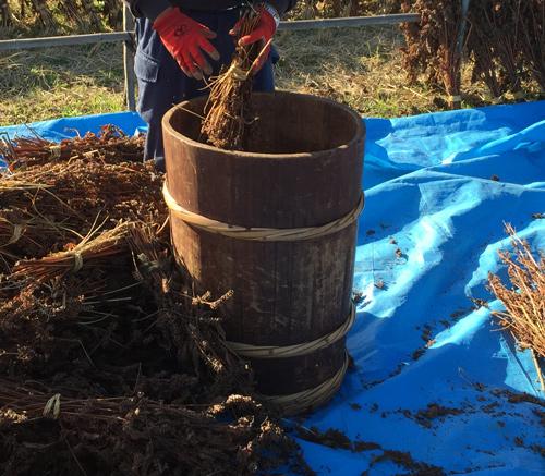 漬物桶をえごま脱穀に使う