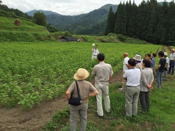 えごま(あぶらえ)畑の現地視察研修会