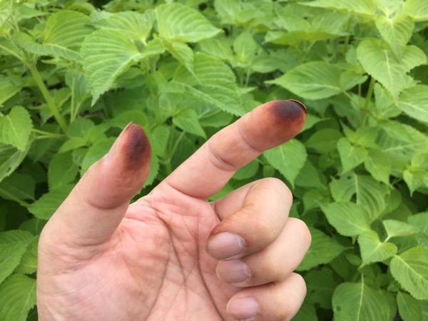 指先が黒くなる